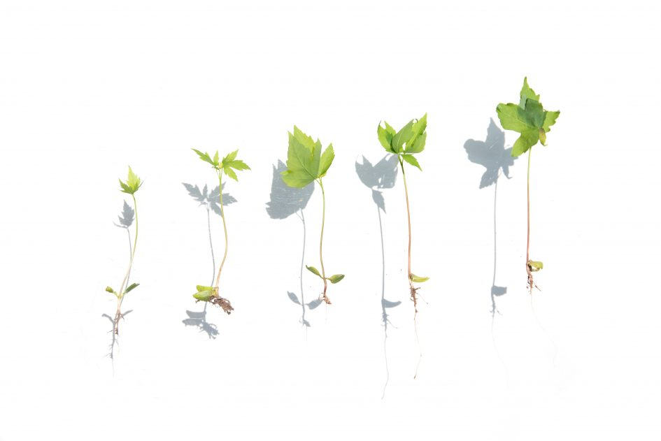 plants at various stages of growth